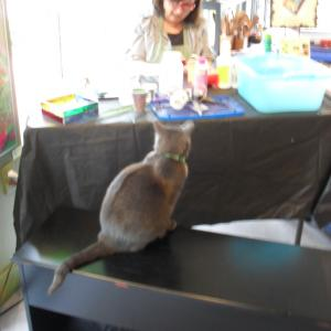 Junipurr watching our demonstrating artist, Lidia Anderson ......intriguing